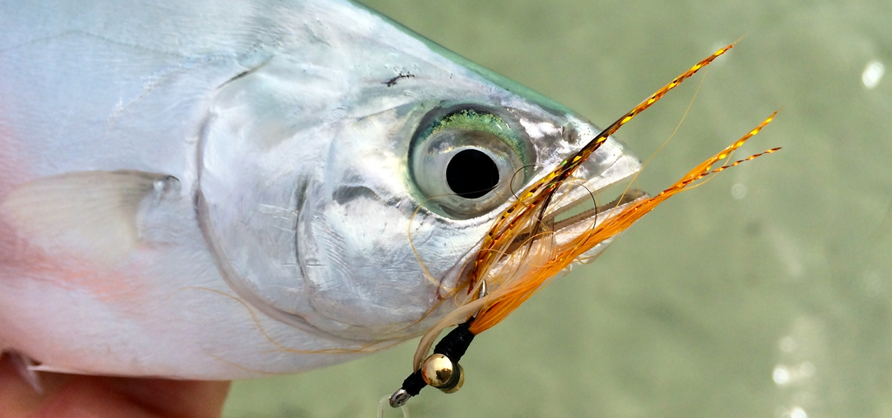 Super light weight fly fishing in the florida keys fly for Fly fishing florida