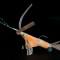 Origami Shrimp: Coral