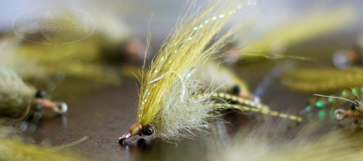Simple Micro Shrimp: Olive