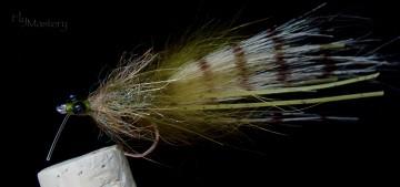 Tarantula Shrimp: Olive